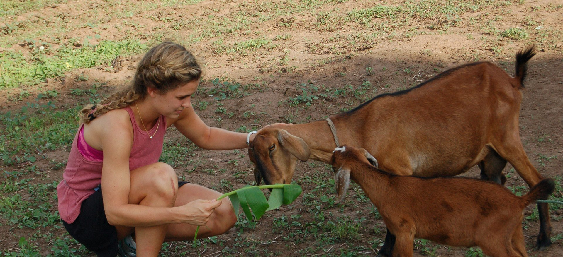 Female student feeding goats.